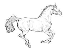 horselines explore horselines on deviantart