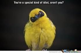 Funny Bird Memes - funny bird by regenclaw meme center