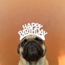 happy birthday a pug named norm by jeremy veach pug lovers