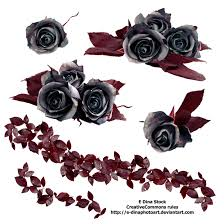 black roses png stock black roses by e dinaphotoart on deviantart