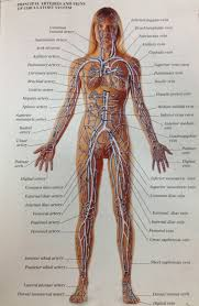 Visual Anatomy And Physiology Pdf Medical Book Research Specialist Practice Year 3