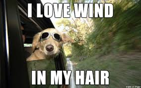 Wind Meme - i love wind in my hair meme on imgur