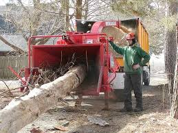 21 best wc tree service images on tree care