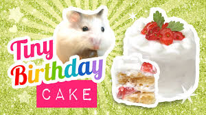 diy edible miniature cake for hamsters or humans make a mini