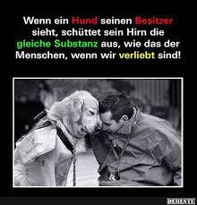 lustige hundesprüche wenn ein hund seinen besitzer sieht debeste de lustige bilder