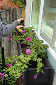 Flower Boxes That Thrive In by Step By Step Guide To Planting A Window Box