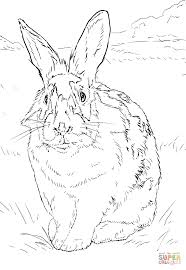 black and white rabbit coloring page free printable coloring pages