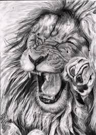 pencil drawings lions face