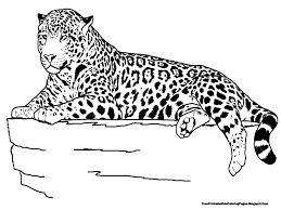 jaguar clipart coloring page pencil and in color jaguar clipart