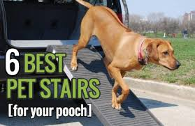 6 best pet stairs to help your dog ramps stairs and steps
