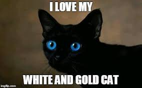 White Cat Meme - catchy cats on twitter i love my white and gold cat cat funny