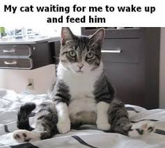 Crazy Cat Memes - cats meme funny pictures and lol crazy cat