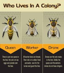 the 25 best types of bees ideas on pinterest different types of