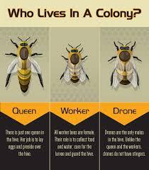 an introduction to beekeeping bees backyard and beekeeping