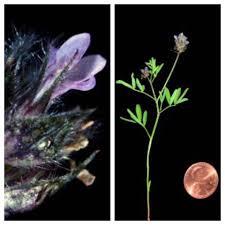 tucson native plants arizona native plant society home facebook