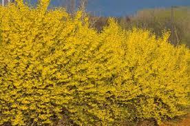 top 10 flowering shrubs flowering bushes birds blooms