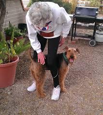 belgian sheepdog rescue trust facebook meet the akc rescue network u0027s top dogs akc dog lovers american