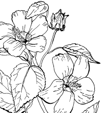 free printable hydrangea flowers coloring pages printable for kids