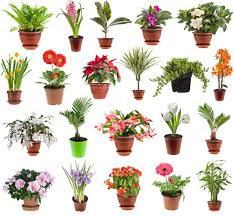 selecting pots for your garden gildshire
