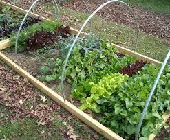 vegetable garden archives gardening tips gardening ideas