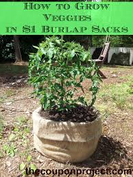 How To Grow Vegetables by Frugal Gardening Growing Food In Burlap Sacks Burlap Sacks