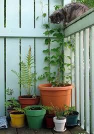 life on the balcony blog about balcony gardening balcony