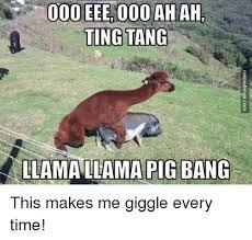 Llama Meme - 25 best memes about llama llama pig bang llama llama pig