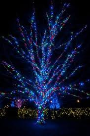 best led lights for outdoor trees the best 40 outdoor christmas lighting ideas that will leave you