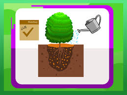 Garden Box Wood Type How To Plant Boxwood 9 Steps With Pictures Wikihow