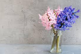 Deco Vase Free Photo Glass Hyacinth Flowers Deco Vase Pink Blue Max Pixel