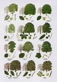 25 unique tree leaves ideas on palm tree leaves