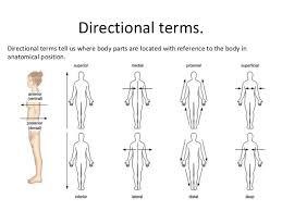 anatomical position terminology luty1123ddnscom