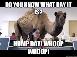 Camel Memes - hump day camel memes day best of the funny meme