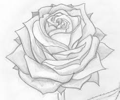 best 25 rose drawings ideas on pinterest easy rose drawing how