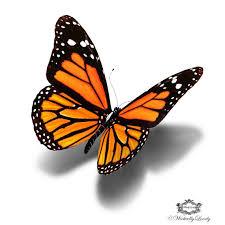 4 3d butterfly designs