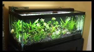 Live Plants In Community Aquariums by 20 Gallon Long Planted Tank One Year After Youtube