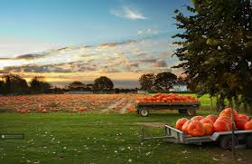 free thanksgiving background images fall scene wallpaper with pumpkins wallpapersafari