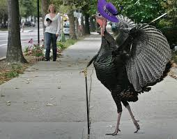 Jive Turkey Meme - psbattle this majestic turkey photoshopbattles