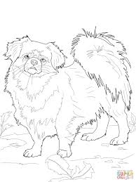 poodle coloring page free printable coloring pages