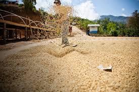 G Stige K Hen Zu Kaufen Guatemala Sun Dried Homeseite Jpg
