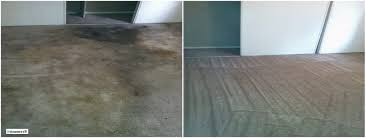 Harding Carpets by Wall To Wall Carpet Cleaning Nyc I Steamers
