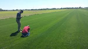concimazione tappeto erboso concimazione azotata prato verde due cose da sapere prima di