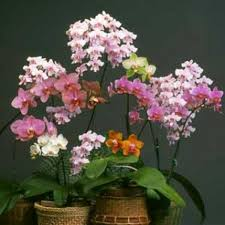 Orchid Delivery Philadelphia Florist Flower Delivery By Nature U0027s Gallery Florist