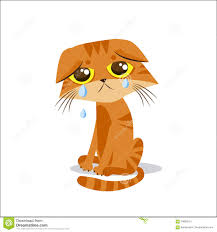 Hands On Face Meme - sad crying cat cartoon vector illustration crying cat meme cat