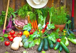 vegetable garden design ideas exterior diy raised gardening tips