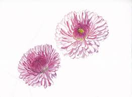 two pink daisies tattoo design
