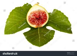 cut green fig showing sticky red stock photo 61446574 shutterstock