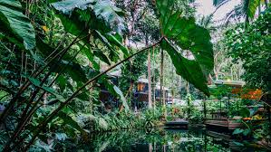 about sustainable rainforest tourism great barrier reef daintree