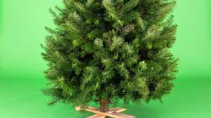 live tree real trees gift guide