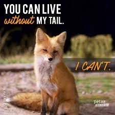 fox tails let foxes keep them peta2